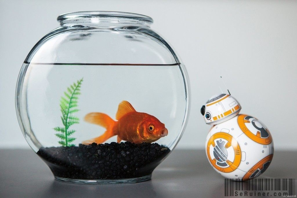 why-you-should-buy-the-sphero-bb8-sphero-s-newly-released-bb8-meets-a-goldfish-602948-1024x683